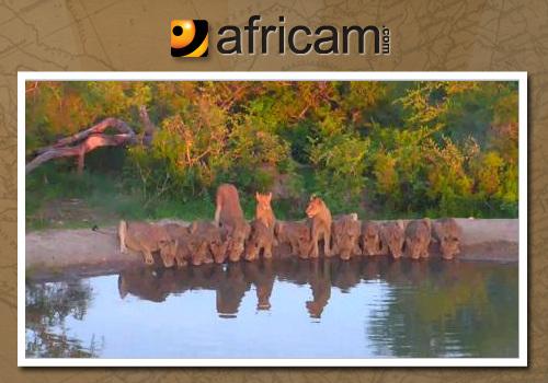 africam-image-na-1-1598219901