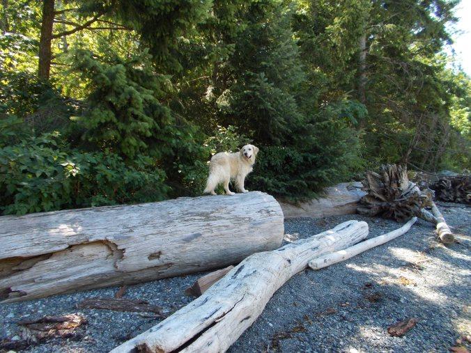 Carolyn's dog on log